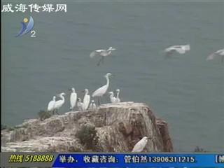 海驴岛鸥鹭齐飞 景色壮观