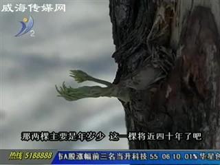 路边大树被人扒皮