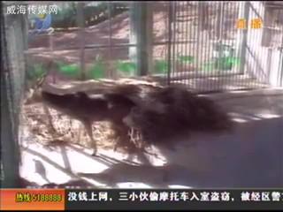 台湾欢送梅花鹿和长鬃山羊代表团放心返程台北