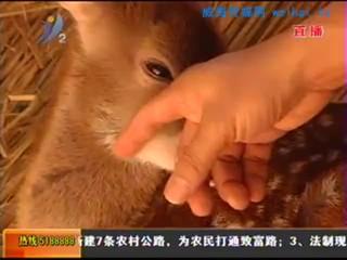 鹿宝宝和羊宝宝有名字了