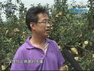 乡风海韵 2012-8-30