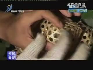乡风海韵2012-9-1