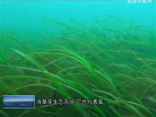 0703海洋生物多样性新