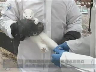 威海检验检疫局助力威海市水貂进口